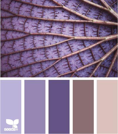 Design Seeds - color leaf