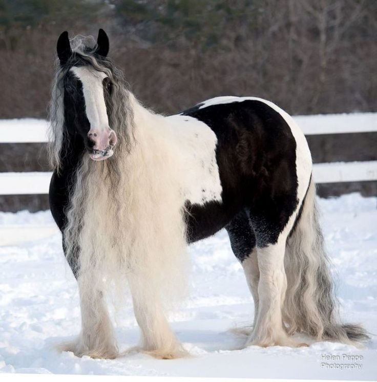 AND I JUST WENT TO THE HAIRDRESSER.......BUT I'M STILL BEAUTIFUL..... #HORSES