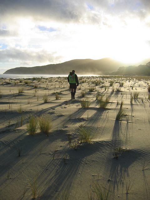 Rakiura track, Stewart Island, New Zealand