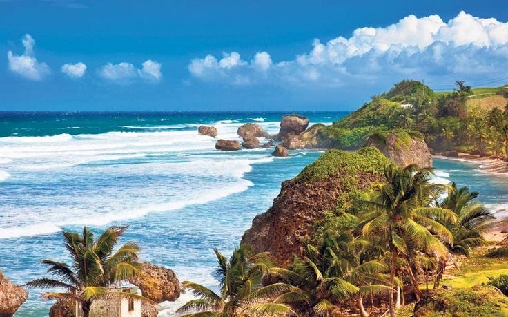 50 Best Beautiful Barbados Images On Pinterest: 1000+ Images About Barbados On Pinterest