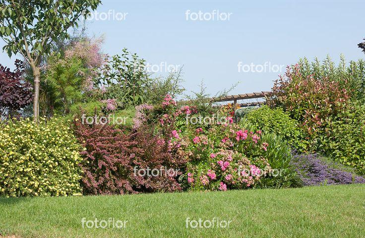 les 25 meilleures id es concernant arbuste fruitier sur pinterest plantation arbre fruitier. Black Bedroom Furniture Sets. Home Design Ideas