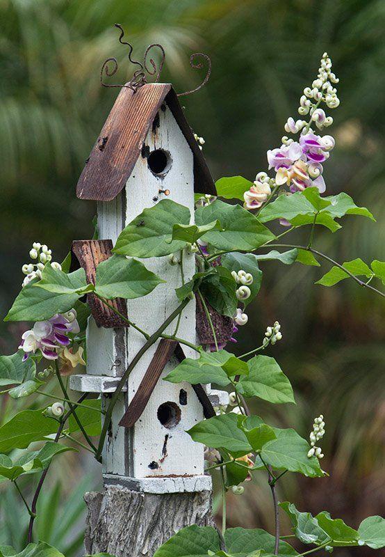 Simple birdhouse and beautiful flowering vine...