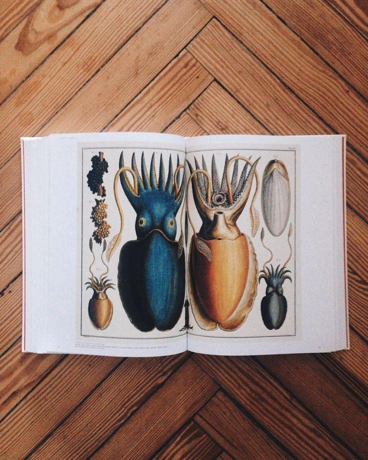 Buscando la inspiración en ilustraciones del siglo XVIII. by cocodavez