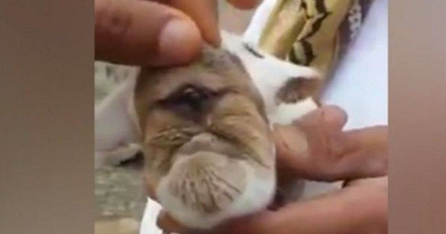 Does Birth Of Cyclops Goat Prove There Are WMD's In The Middle East? :http://gossfeed.com/2016/11/16/cyclops-goat/