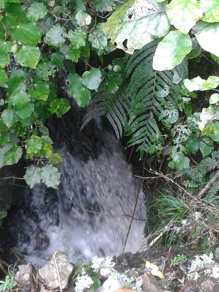 Waterfall after steady rainfall in Tararua Ranges side of Mangaore Road by Jenny Rive