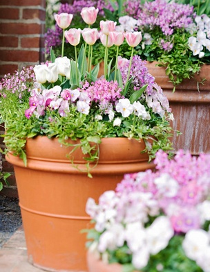 67 best spring containers images on pinterest container garden spring gardening pots mightylinksfo Image collections