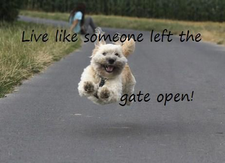 Somebody left the gate open live life like a dog