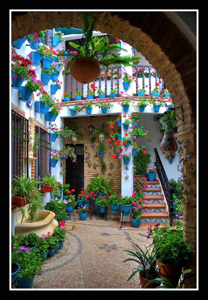 All sizes   0206 flores hasta en las caracolas (patios cordoba)   Flickr - Photo Sharing!