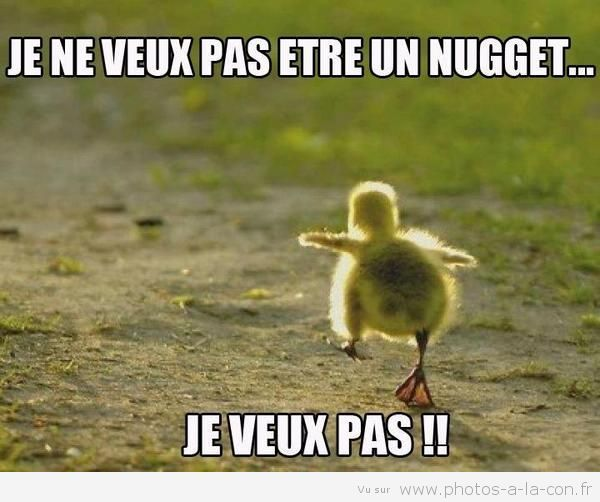 image drole poussin le pauvre - more funny things: http://hotfunnystuff.com
