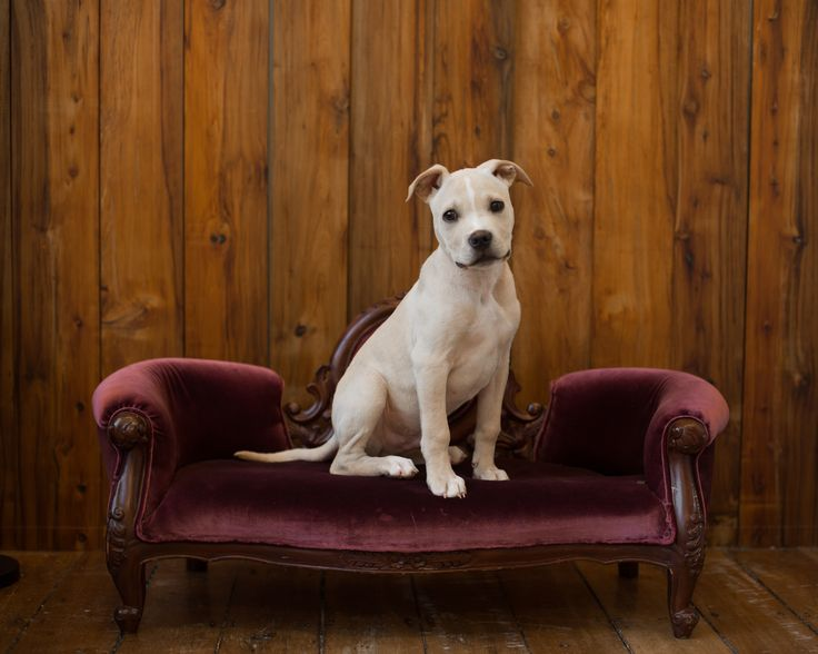 Pet portraits | Dog photos | Laura Ridley Photography