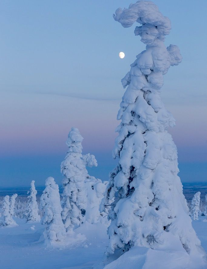Sentinels of the Arctic - Finland