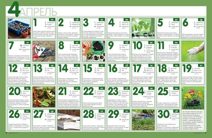 Наиболее благоприятные дни апреля для работы с растениями по Лунному посевному календарю 2016 года -1, 8-11, 12-15, 17-21, 27-28.