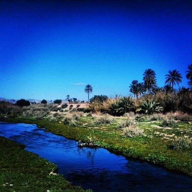 Cauce del río Vinalopó en el campo de Elche.