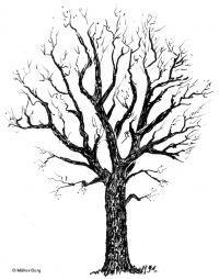 national tree of england - royal oak