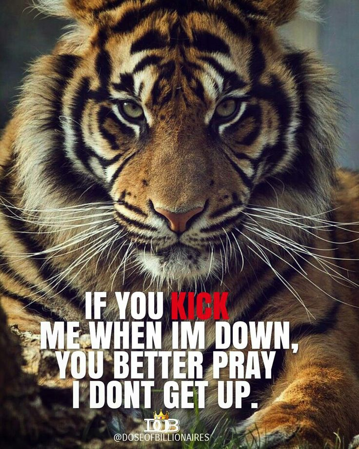 tiger quotes wwwpixsharkcom images galleries with a