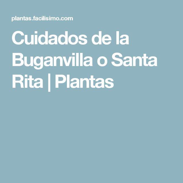 Cuidados de la Buganvilla o Santa Rita | Plantas