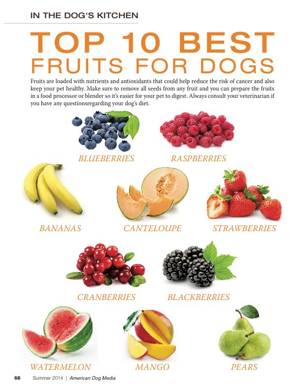 Dog Safe Food That Can Be Eaten Raw