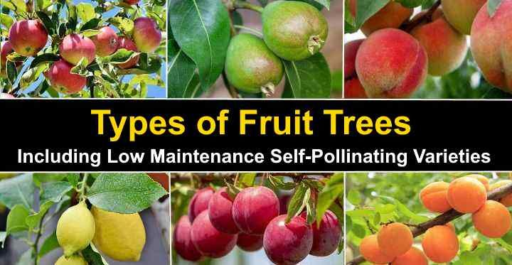 Types Of Fruit Trees With Pictures With Self Pollinating Types Dwarf Fruit Trees Fruit Tree Garden Fruit Trees