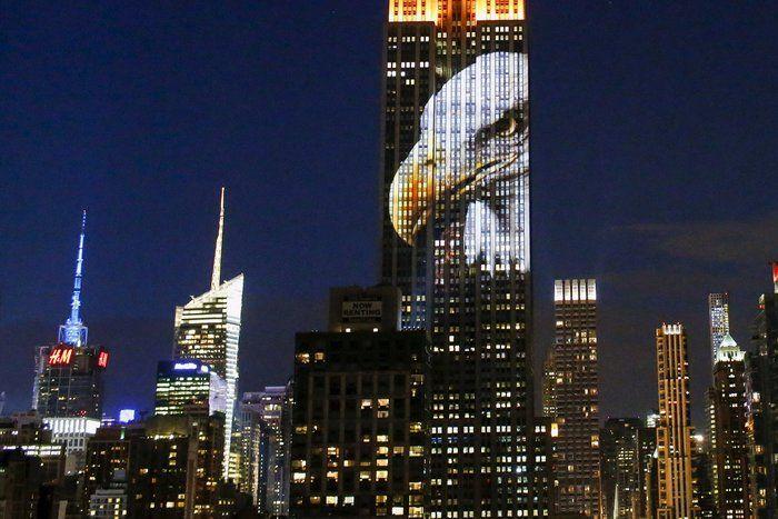 Ο Σεσίλ, το λιοντάρι στο πιο εμβληματικό κτίριο της Νέας Υόρκης.