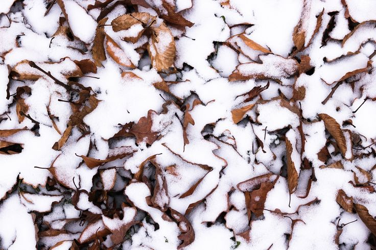 snow and leaves. nothing special. #nautre #snow #leaves #forest #fresh #background