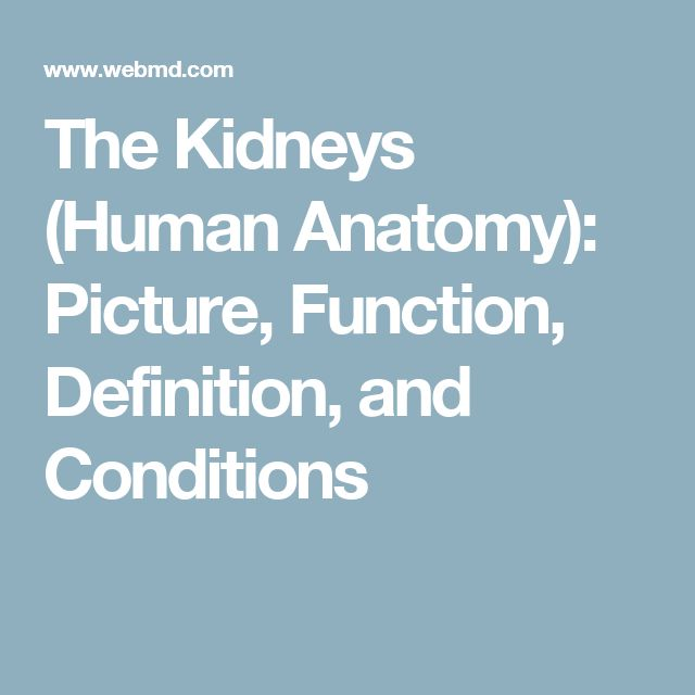 The Kidneys (Human Anatomy): Picture, Function, Definition, and Conditions