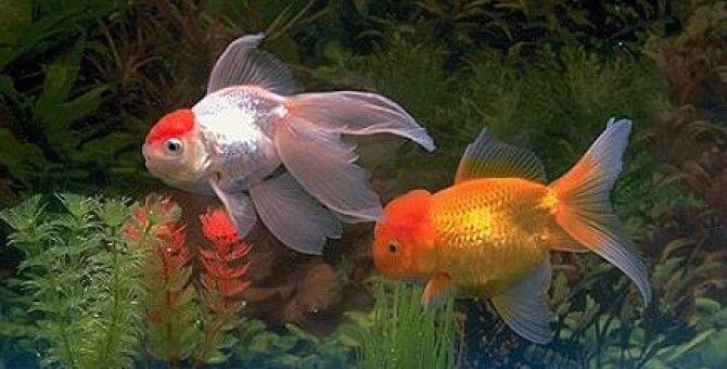Do fish sleep
