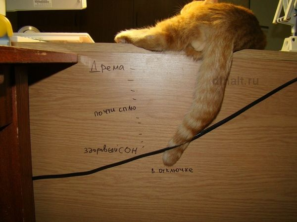 как спят коты фото - Поиск в Google