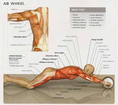 Abdominal-wheel-exercise - Abs training program