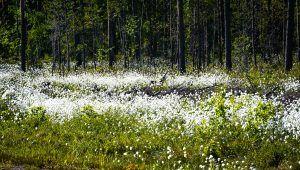 Kuvat | Suomen Luonto