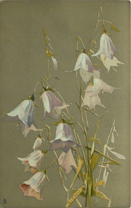 """Hare-bells"" by Catherine Klein ~ 1907."