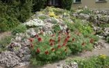 Steinbeet красные цветы