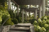 Perennials mingle with a dense planting of Little Lime Hydrangea  American  TraditionalNeoclassical  Garden  Patio  Architectural Detail by Janice Parker Landscape Architects