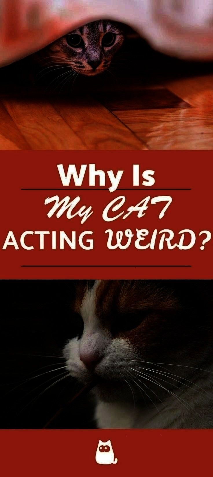 Therereasons Hidingweird Felineacts Mannerisms Normalcat Couldyour Isntthere Isntyour Behavior Tocataw Illness Reasons Strange Changes Actingther 2020