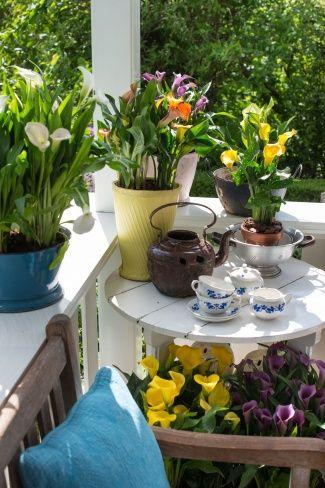 Teestunde auf der Terrasse mit der Calla #calla #pflanze #plant #pflanzenfreude #outdoor