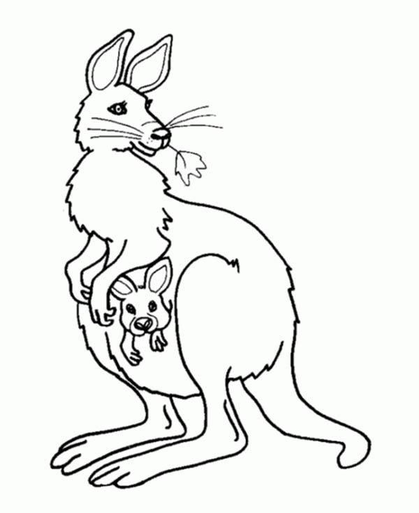Kangaroo And Baby Kangaroo In The Pouch Coloring Page Netart Coloring Pages Disney Coloring Pages Easy Coloring Pages