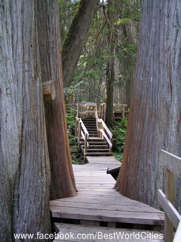 Giant Cedars, Mount Revelstoke National Park, BC Canada
