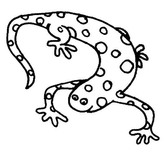 Lizard Reptiles Creeping