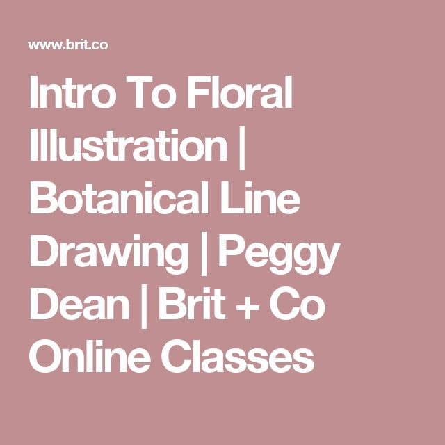 Intro To Floral Illustration | Botanical Line Drawing | Peggy Dean | Brit + Co Online Classes