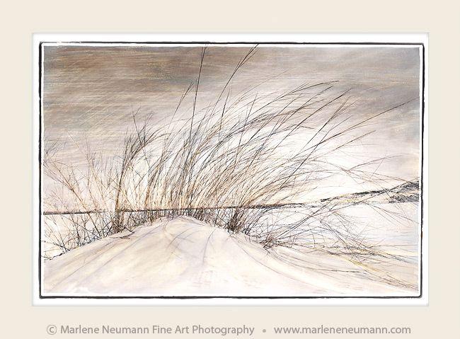 Dune Breeze