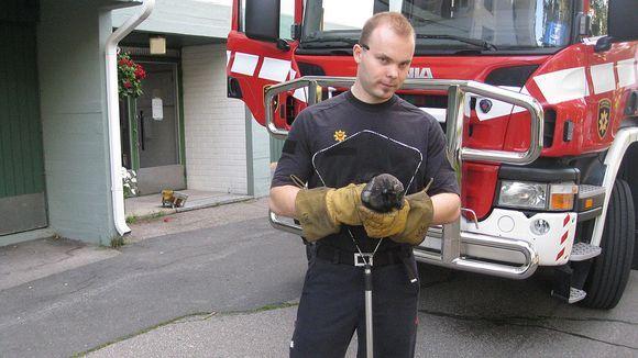 Palomies ja pelastettu orava