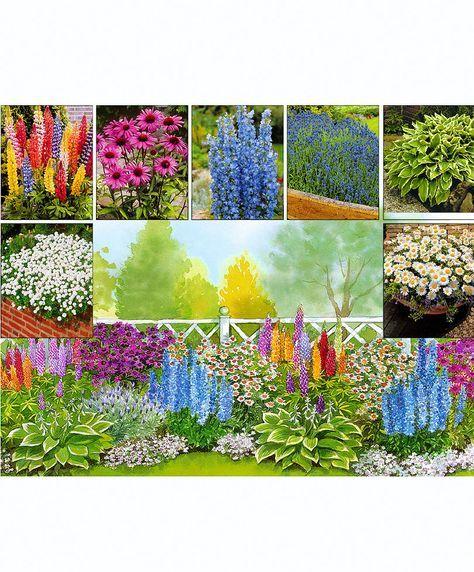 30 langblühende Beetpflanzen in 7 verschiedenen Sorten | Stauden | Bakker