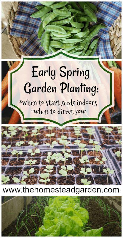 Early Spring Garden Planting Guide Cris @The Homestead Garden