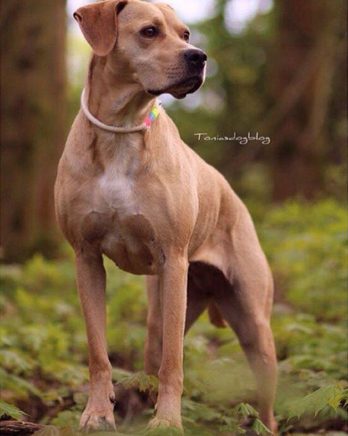 Guten Morgen liebes @instagramde  Schaut mal hier haben wir ein schönes Foto  von der wunderhübschen Labrador Hündin  Tonia @toniasdogblogs bekommen! Sie trägt auch unser Halsband und bald erscheint ein Beitrag auf ihrem Hundeblog über uns!  Habt alle einen schönen #Dienstag  #labradorretriever #labrador #vierbeiner #hund #hundehalsband #hundeleine #hundeliebe #tauleine #frenchbully #hundehalsbandkaufen #ropeleash #hundezubehör #hundedesign #handmade #selbstgemacht #hundehalsbandzuverkaufen…