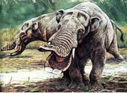 An ancient Elephant Ancestor, Gomphotheres have both upper and lower tusks. At a height of 8ft.(2.4M), it lived about 13 to 1.6 Million Years Ago. These prehistoric elephants have low and elongated skulls. They ranged widely in North America and Florida during the Miocene and Pliocene Periods. The last ones going extinct in North America during the Pliocene Period were only left in Florida. Many Gomphophere fossils can be found there.