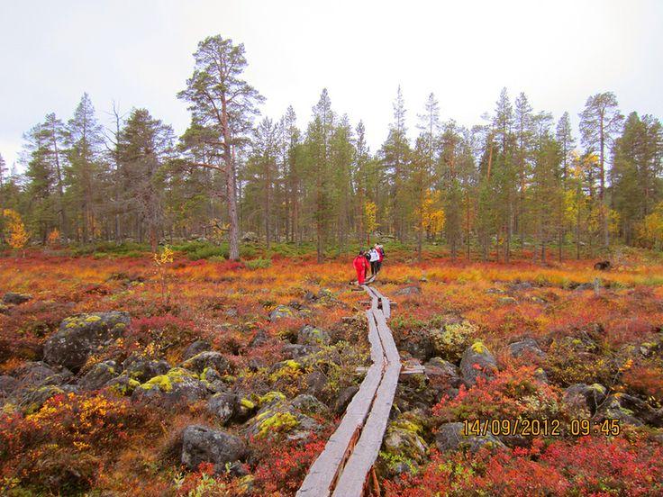 Inari in the fall, Lapland Finland - Komeetat ruskavaelluksella Inarin maisemissa