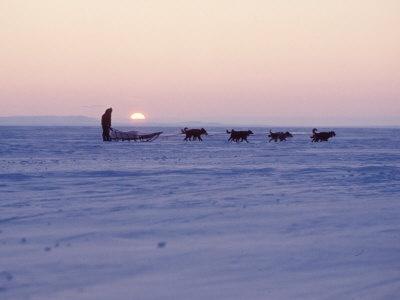 Alaskan dog sled