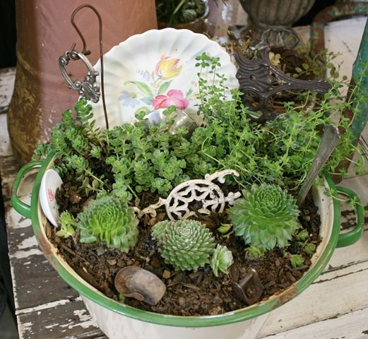 another dis garden with succulents