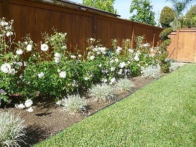 Best Rose Garden Images On Pinterest Flowers Beautiful
