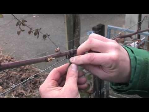 Brombeeren schneiden - YouTube