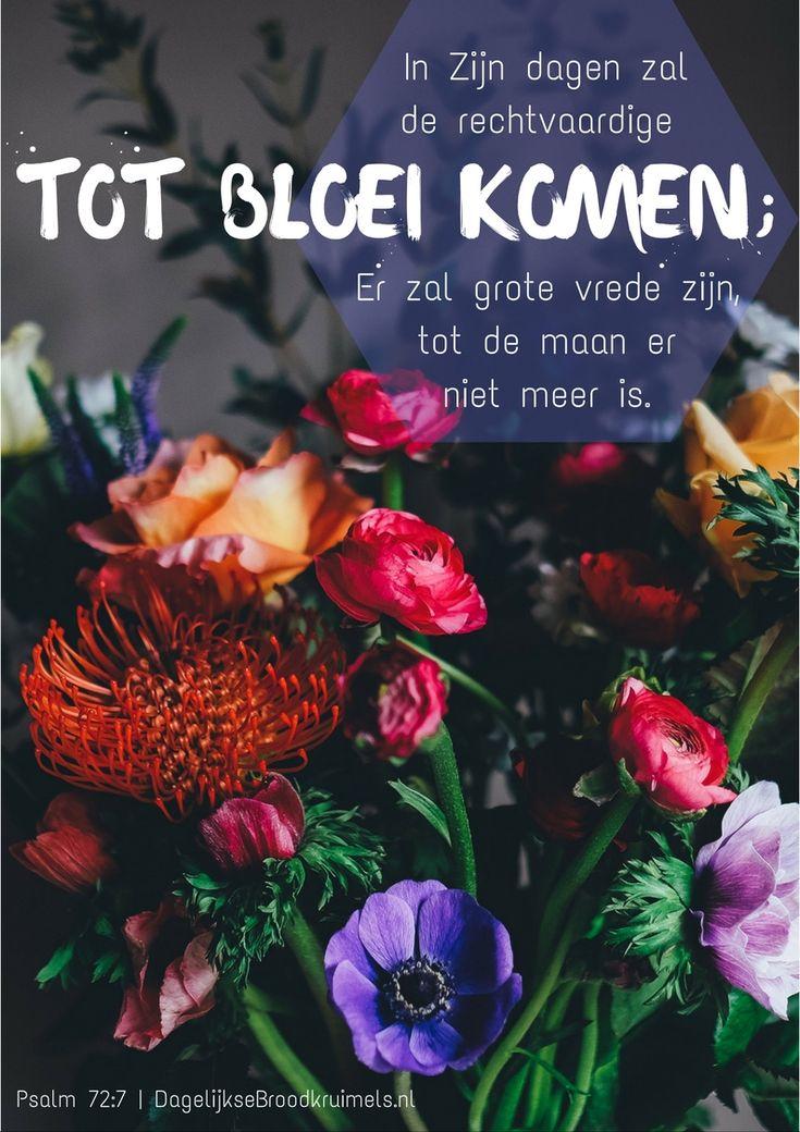In Zijn dagen zal de rechtvaardige tot bloei komen; er zal grote vrede zijn, tot de maan er niet meer …